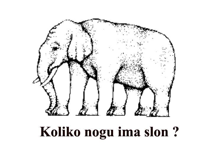 05-Slon.JPG