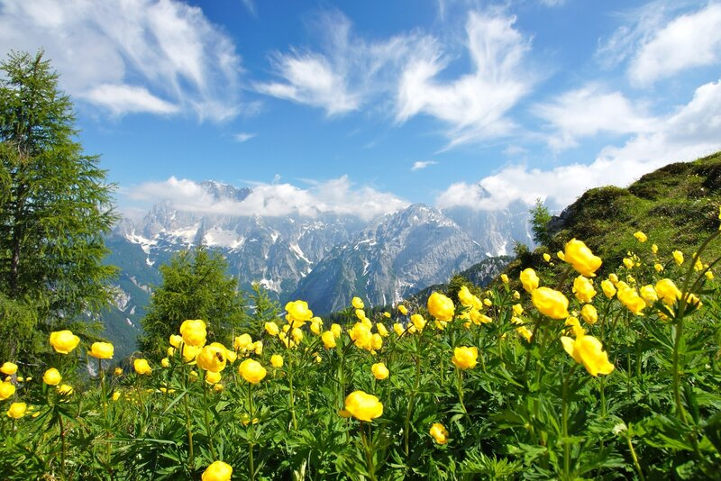 2912469-photography-nature-landscape-summer-wildflowers-mountains-clouds-green-yellow-trees-al...jpg