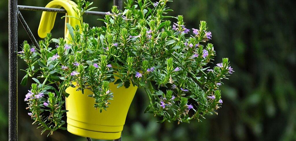 5 saveta kako da zaštitite biljke od vrućine 665.jpg