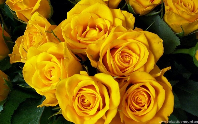 796193_wallpaper-bright-yellow-roses-bouquet-flower-beautiful-wallpapers_2560x1600_h.jpg
