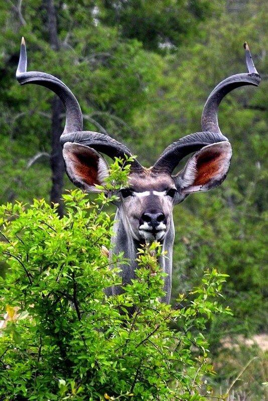 85e7b03b05eca4037a0801fc578015d9--wild-life-wild-animals.jpg