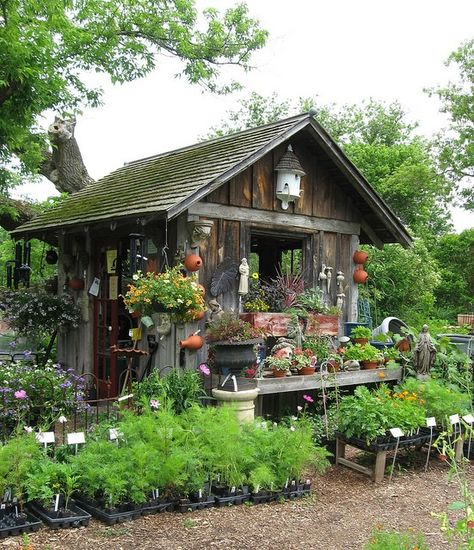 975333c8d7f6a6ae48eec14bf018d0dd--garden-shop-dream-garden.jpg