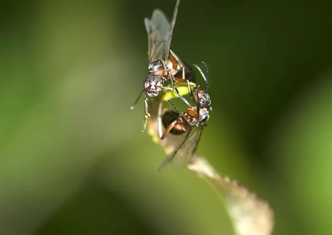 ant-sex.jpg