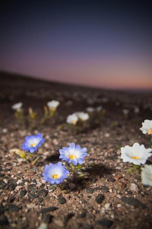 Atacama-2.jpg