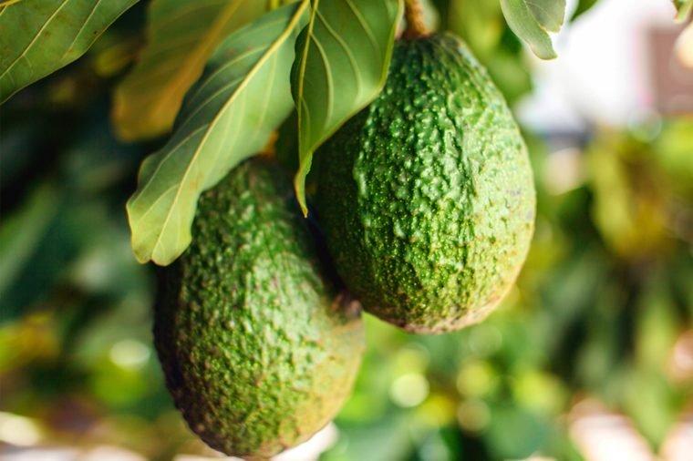 avocado-name-origin-760x506.jpg