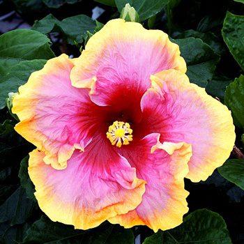beautiful-flowers-images_594567879.jpg