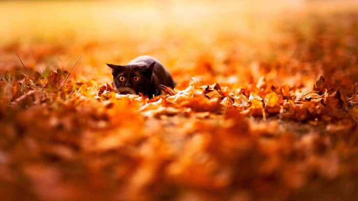 cat-and-leaves.jpg