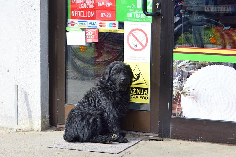 црни пас.jpg