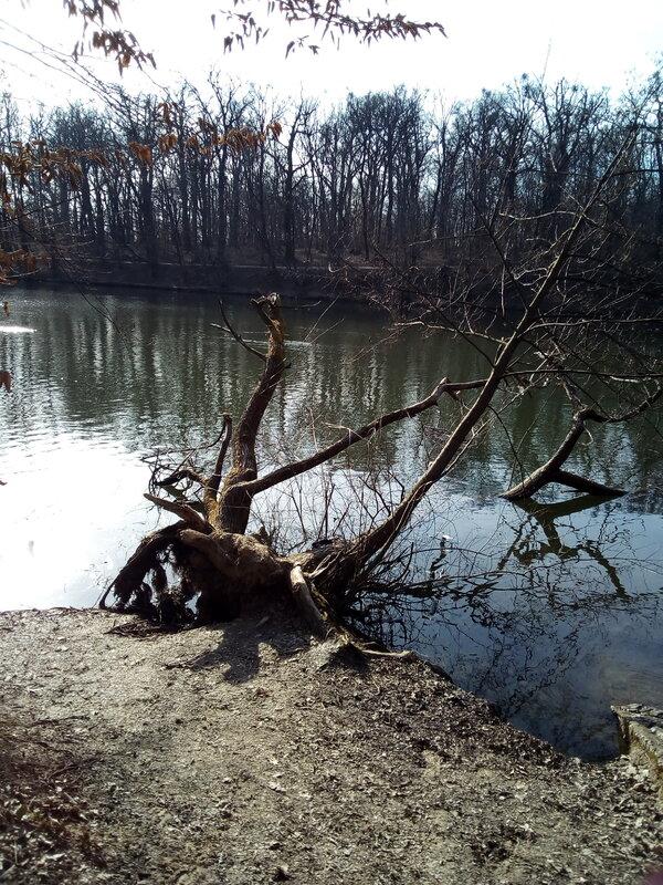 drvo.jpg
