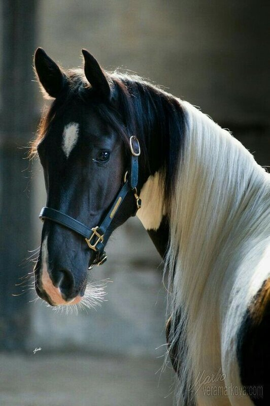 eea5a1657df79e47fcf0843f4d6a7d6f--horses.jpg