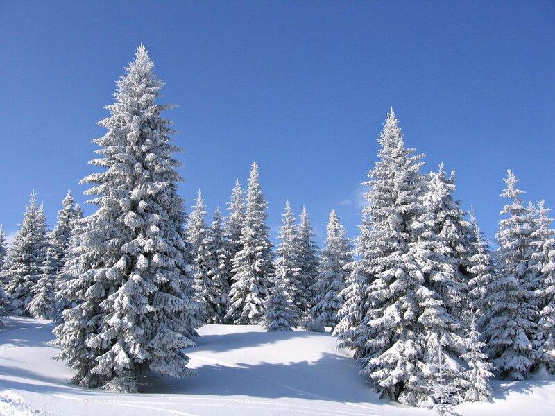 F.Alpi2.jpg