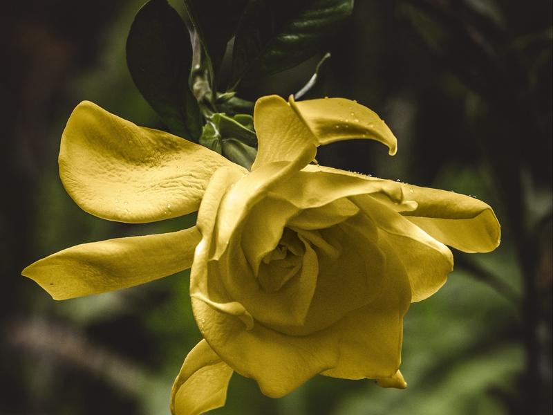 flower_yellow_macro_138076_800x600.jpg