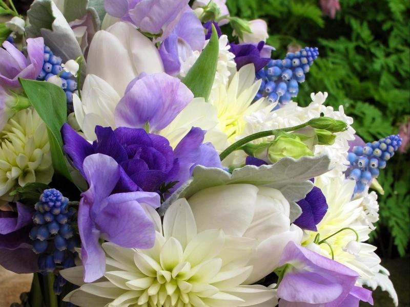 flowers_flower_beautiful_82974_800x600.jpg