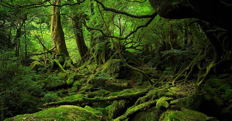 forest japan.jpg