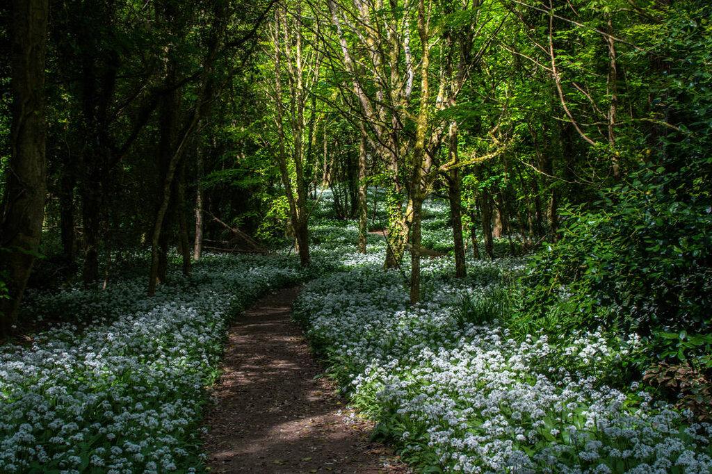 forest_scene_stock_01_may_2018_by_aledjonesdigitalart_dcbxyd8-pre.jpg