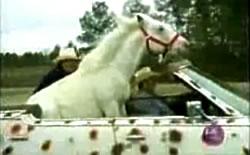 horse-in-car.jpg