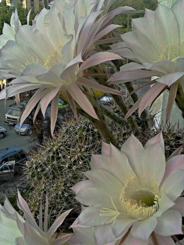 kaktus3.jpg