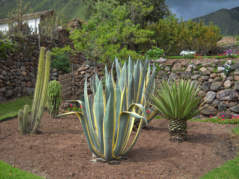 kaktusi.jpg