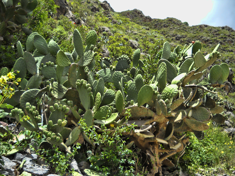 kaktusi1.jpg