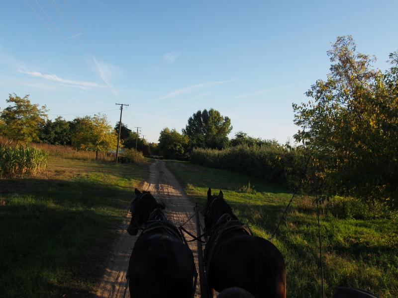 konji.jpg