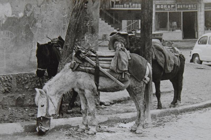 коњи.jpg