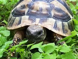 kornjaca.jpg
