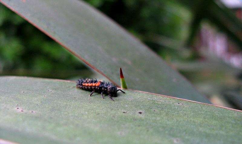 larva1.jpg