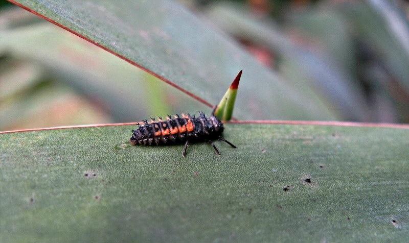 larva3.jpg