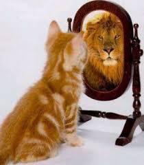 lav u ogledalu.jpg