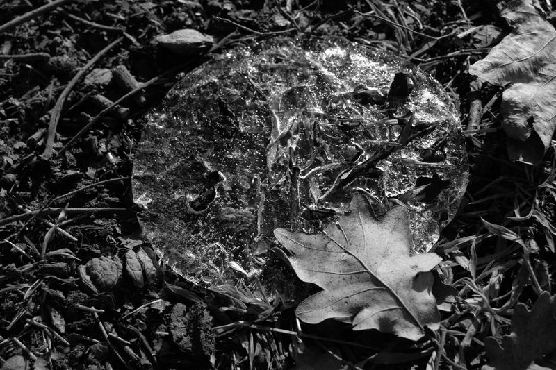 лед и лишће ЦБ.jpg