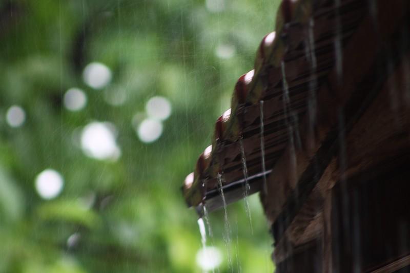 летња киша.jpg