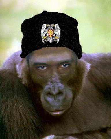 majmunoliki-cetnik.jpg