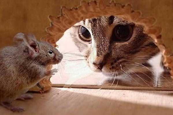 миш и мачка.jpg