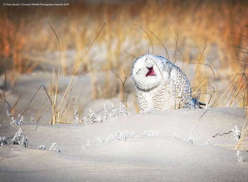 насмејана сова.jpg