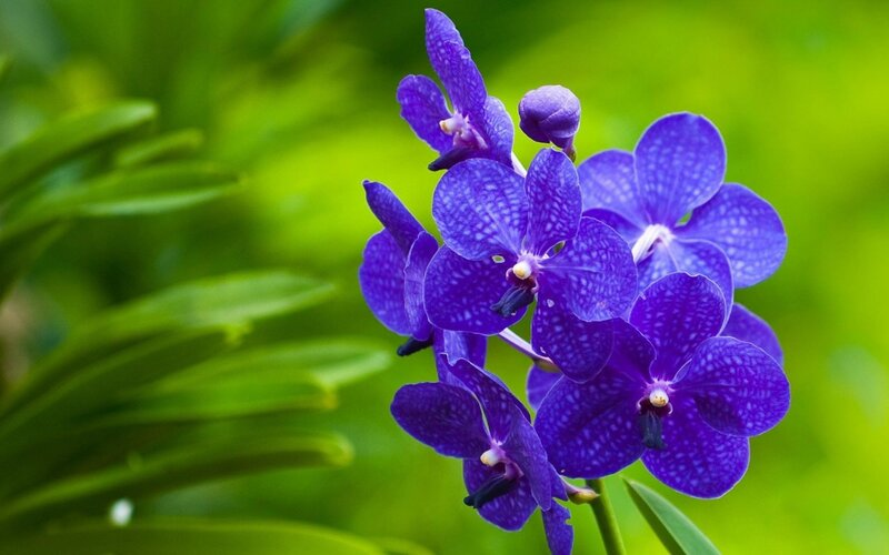 orchid-wallpapers-27995-9137120.jpg
