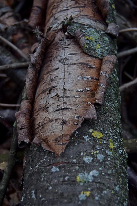 отворена кора дрвета.jpg
