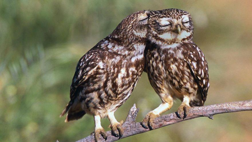 owl-photography-cute-100__880.jpg