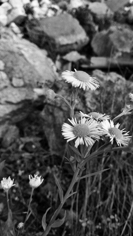 PicsArt_01-12-07.09.18-01.jpeg