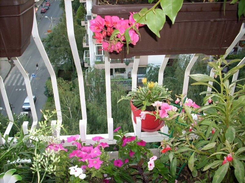 pogled sa terase v.jpg