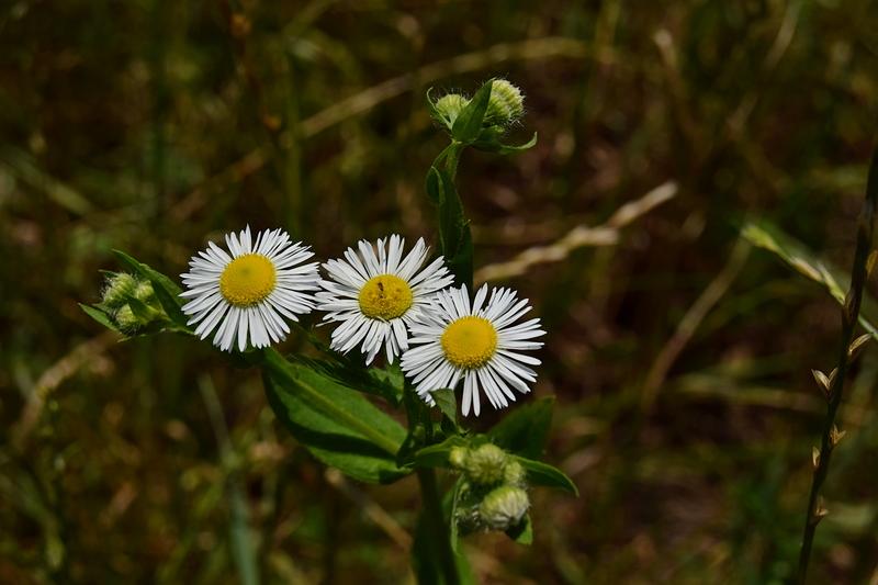 пољско цвеће 13 часова.jpg