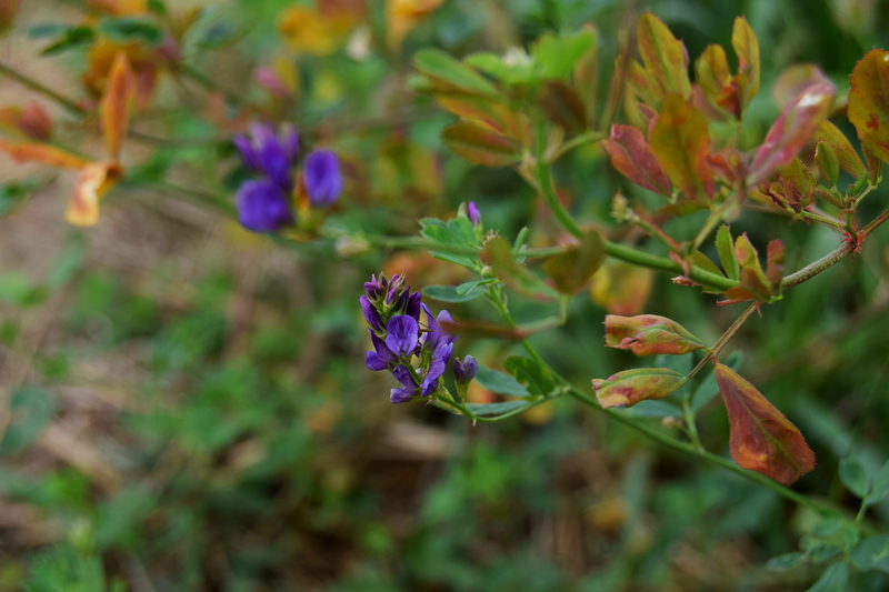пољско цвеће јесен.jpg