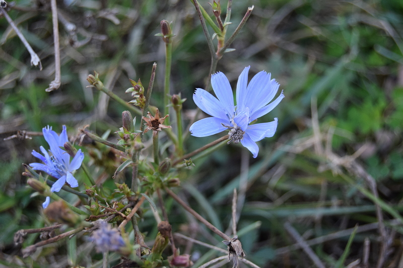пољско цвеће.jpg
