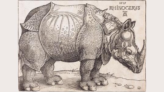 s-Rinocerus-NKP-1[1].png