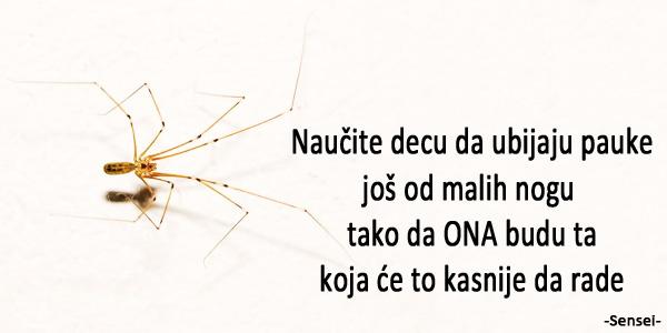 sensei-spider.jpg