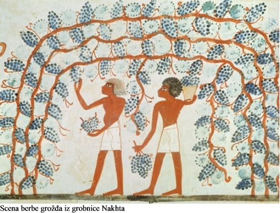 Simbolika vinove loze i groa 1 a.jpg