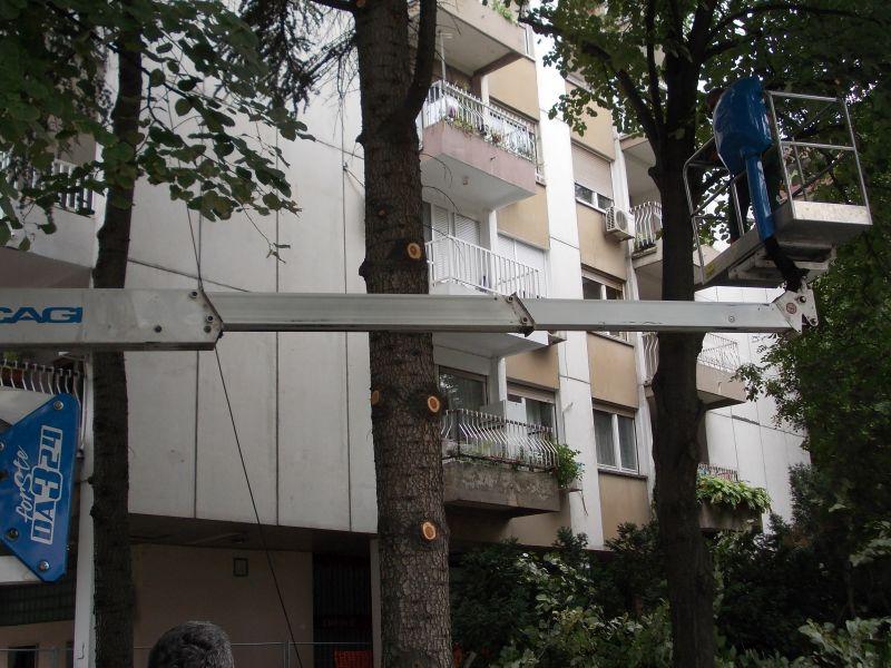 SOLUNSKA SECA KROSNJI STABALA zbog izgradnje decijeg igralista - POGLED iz Dubrovacke ulice 2.jpg