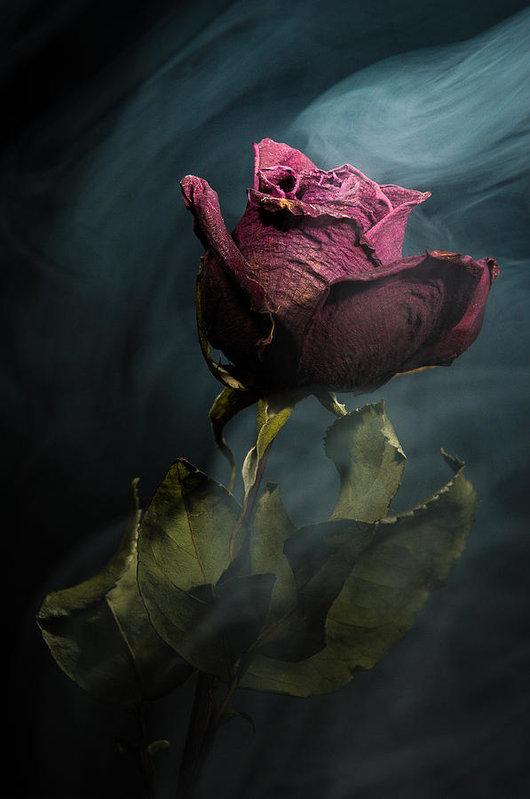 spirit-of-a-dying-rose-vincent-knaus.jpg