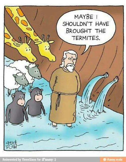 termiti.jpg