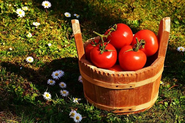 tomatoes-2176846_640.jpg