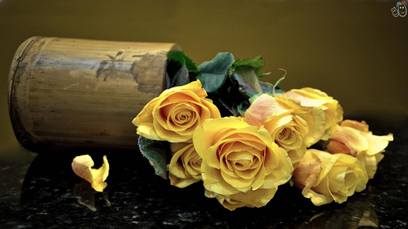 yellow_roses_passion_beauty_lovely_nature_hd-wallpaper-1647174.jpg